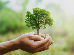 Hände halten Erde, aus der ein kleiner Baum wächst