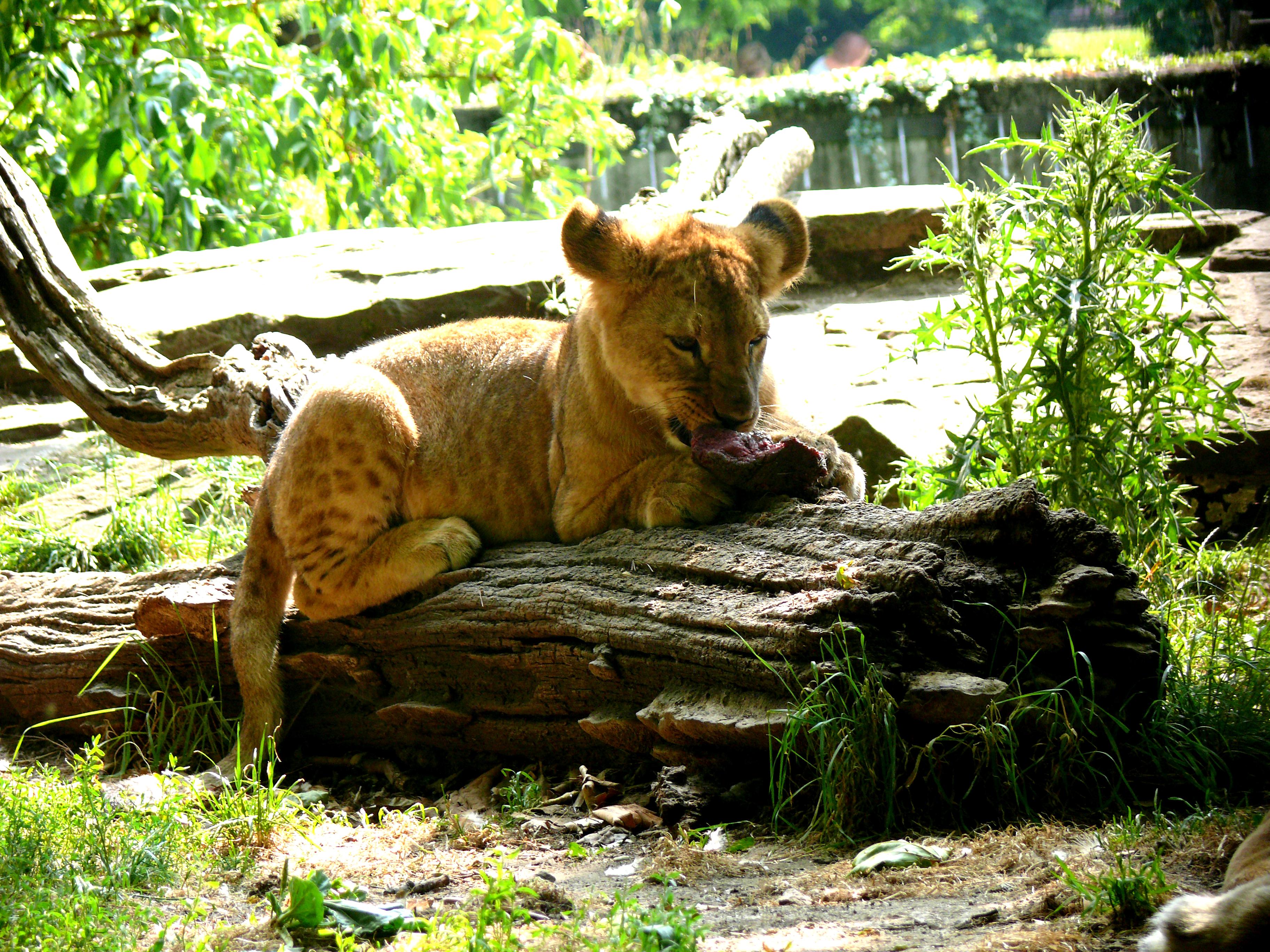 medien zoo dortmund freizeit kultur tourismus stadtportal. Black Bedroom Furniture Sets. Home Design Ideas